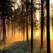 AMLO..planea sembrar 1 millón de hectáreas con árboles maderables