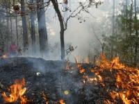 Solicitarán declaratoria de emergencia por incendios forestales en Oaxaca