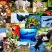 Un millón de especies en peligro por 300 toneladas de contaminantes