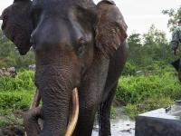 12 días para trabajar en favor de especies y los ecosistemas mundiales